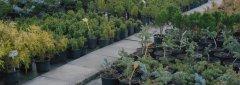 Zahradnictví a květinářství Kelč