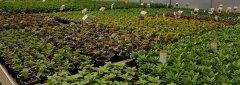 zahradnictví Kelč pěstování rostlin